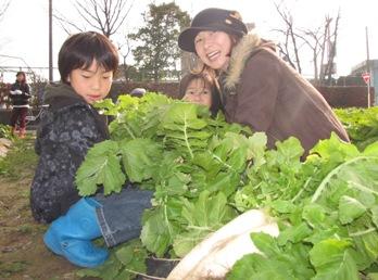JA 海部東農業協同組合(あまひがし) -伝統野菜「方領大根」が立派に成長