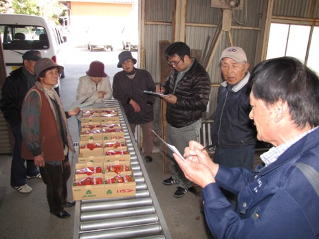 JA 海部東農業協同組合(あまひがし) -品質自慢のイチゴたちが出荷
