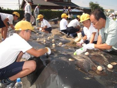JA 海部東農業協同組合(あまひがし) -宝物を埋めるように植え付けを行う