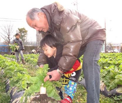 JA 海部東農業協同組合(あまひがし) -農業体験で伝統野菜「方領大根」の収穫