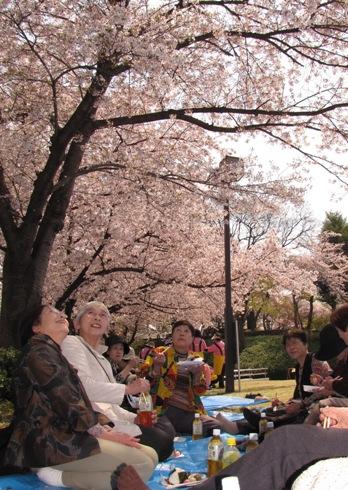 JA 海部東農業協同組合(あまひがし) -絶景!満開の笑顔と桜の共演