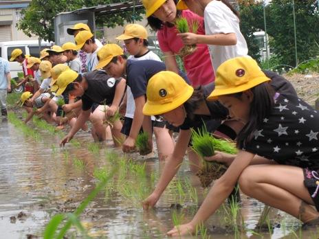 JA 海部東農業協同組合(あまひがし) -お米が出来る過程を学ぶ