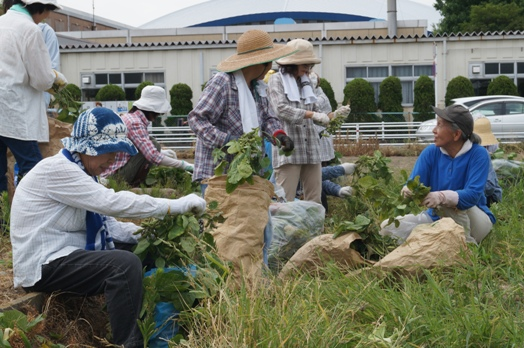 JA 海部東農業協同組合(あまひがし) -「畑の学校」が収穫祭を開く