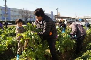 JA 海部東農業協同組合(あまひがし) -幻の味「方領大根」を収穫