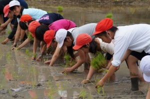 JA 海部東農業協同組合(あまひがし) -各支店が田植え体験に協力