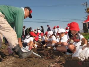 JA 海部東農業協同組合(あまひがし) -小学生がサツマイモ掘りを体験