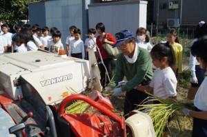 JA 海部東農業協同組合(あまひがし) -神守小学校児童が稲刈り体験を行う