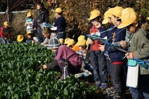 JA 海部東農業協同組合(あまひがし) -小学生が特産小松菜の勉強会