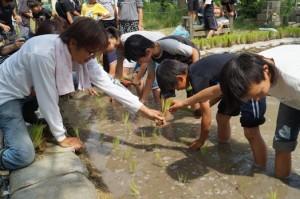 JA 海部東農業協同組合(あまひがし) -小学校の校庭に水田が完成