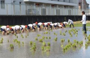 JA 海部東農業協同組合(あまひがし) -青年部が児童に田植え体験で指導を行う