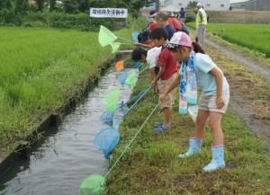 JA 海部東農業協同組合(あまひがし) -用水路で子どもたちが生き物調査