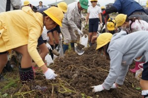 JA 海部東農業協同組合(あまひがし) -小学生が土と触れ合い収穫体験を行う
