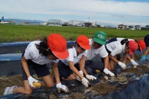 JA 海部東農業協同組合(あまひがし) -収穫を楽しみに定植