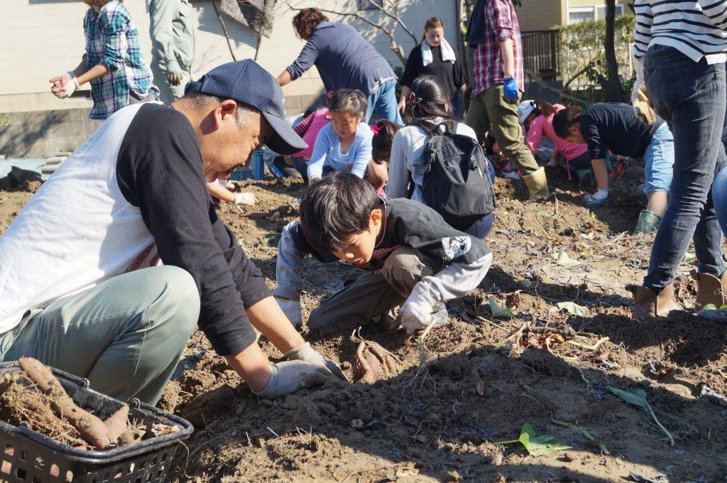 JA 海部東農業協同組合(あまひがし) -ドリームジュニア サツマイモ収穫で復興支援