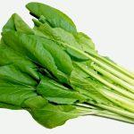 JA 海部東農業協同組合(あまひがし) -連作にも強く、長期収穫も狙える小松菜