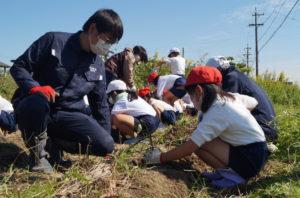JA 海部東農業協同組合(あまひがし) -蛭間小学校 サツマイモの収穫体験を指導