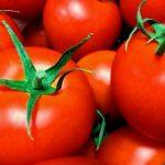 JA 海部東農業協同組合(あまひがし) -大玉トマト作り成功のポイント