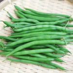 JA 海部東農業協同組合(あまひがし) -育てやすくて新鮮な味が格別 つるありインゲンマメ