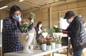 JA 海部東農業協同組合(あまひがし) -お正月に向けて寄せ植えを制作
