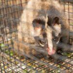 JA 海部東農業協同組合(あまひがし) -鳥獣害から菜園を守る