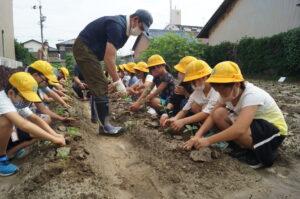 JA 海部東農業協同組合(あまひがし) -地元の特産野菜を栽培しよう モロヘイヤの定植体験