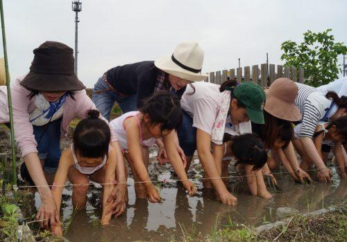 JA 海部東農業協同組合(あまひがし) -美和支店 小さな手で田植え体験