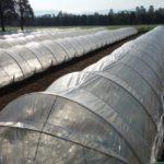 JA 海部東農業協同組合(あまひがし) -菜園の冬越し いろいろな工夫で長く収穫を楽しむ