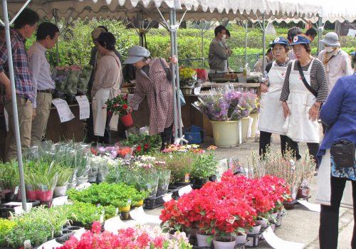 JA 海部東農業協同組合(あまひがし) -あま市花き園芸組合 地域の花き園芸をPR