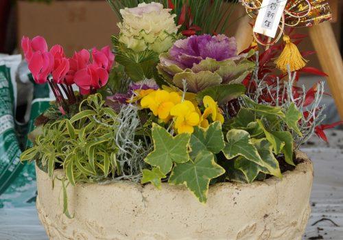 JA 海部東農業協同組合(あまひがし) -新年を迎える華やかな寄せ植え