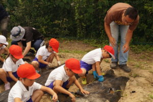 JA 海部東農業協同組合(あまひがし) -青壮年部 サツモイモ定植体験に協力