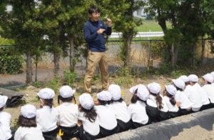JA 海部東農業協同組合(あまひがし) -甚目寺東小学校 サツマイモ苗の定植体験