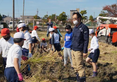 JA 海部東農業協同組合(あまひがし) -実りの秋 小学校稲刈り体験