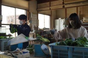 JA 海部東農業協同組合(あまひがし) -新入職員の農業研修 初めての農作業
