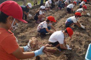 JA 海部東農業協同組合(あまひがし) -美和東小学校 農業体験 野菜の収穫を体験