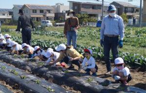 JA 海部東農業協同組合(あまひがし) -育てる楽しさを実感しよう サツマイモ苗の定植体験