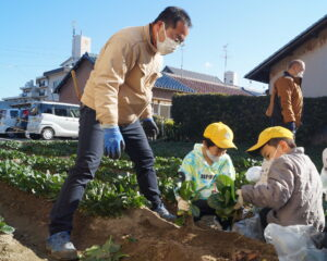 JA 海部東農業協同組合(あまひがし) -大治小学校農業体験 冬の小松菜を収穫
